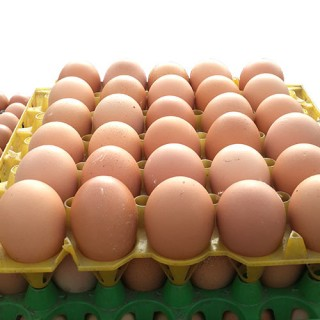Fresh Eggs 15pcs